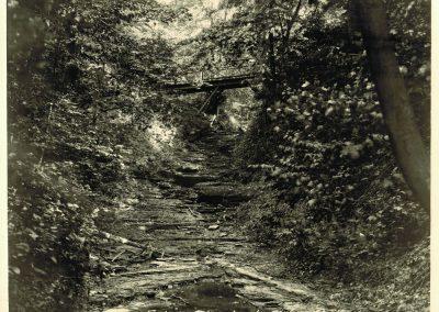 web-Chestnut-Ridge-16